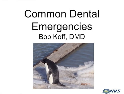 Dental Emergencies - Bob Koff